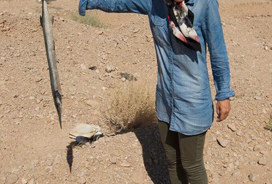 Vissen in de woestijn